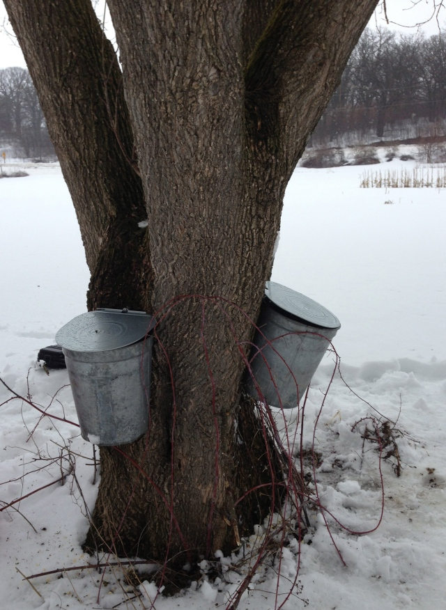 buckets on tree