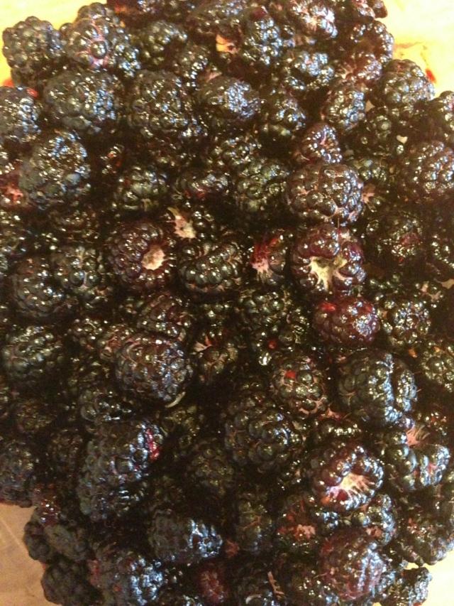 black cap berries