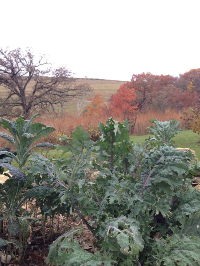 kale : fall