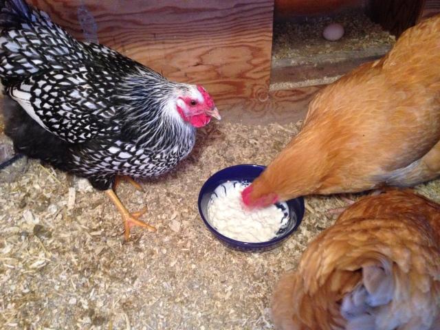 Chickens Xmas Eve