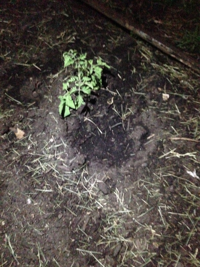 planting at night