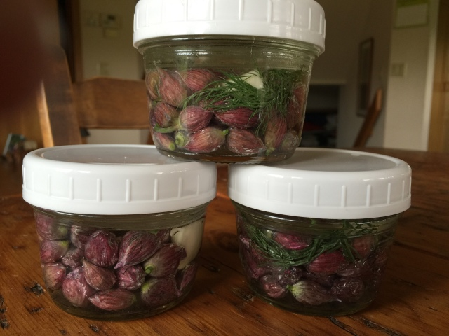 chive bud ferment
