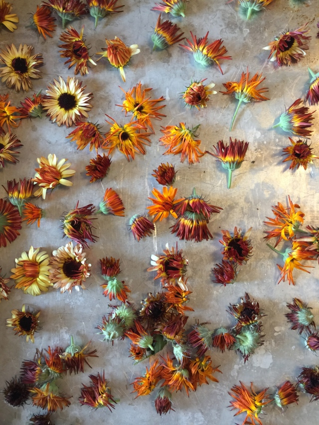 dried calendula