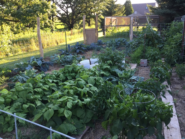 july big garden